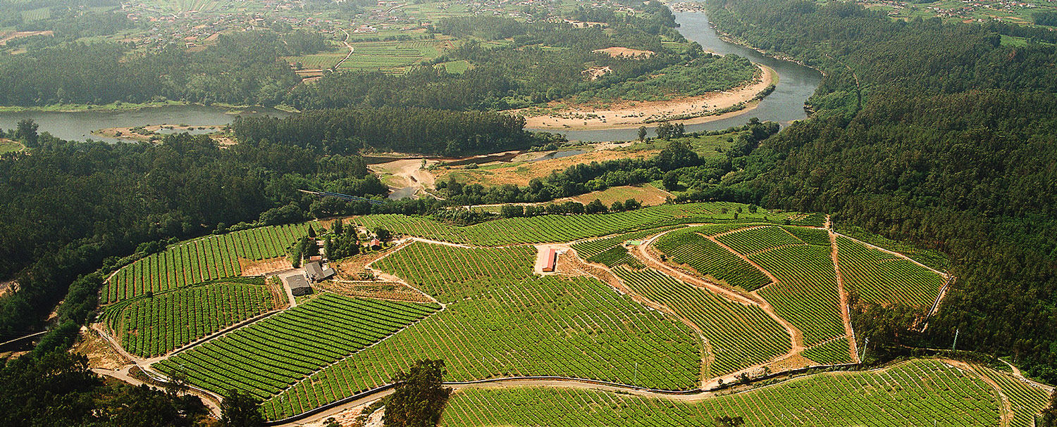 Landscape of the vineyards of Fillaboa Winery